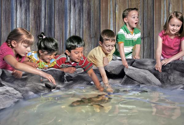 Wholesale aquariums kidsaquariumsquotes and more for Toddler fish tank