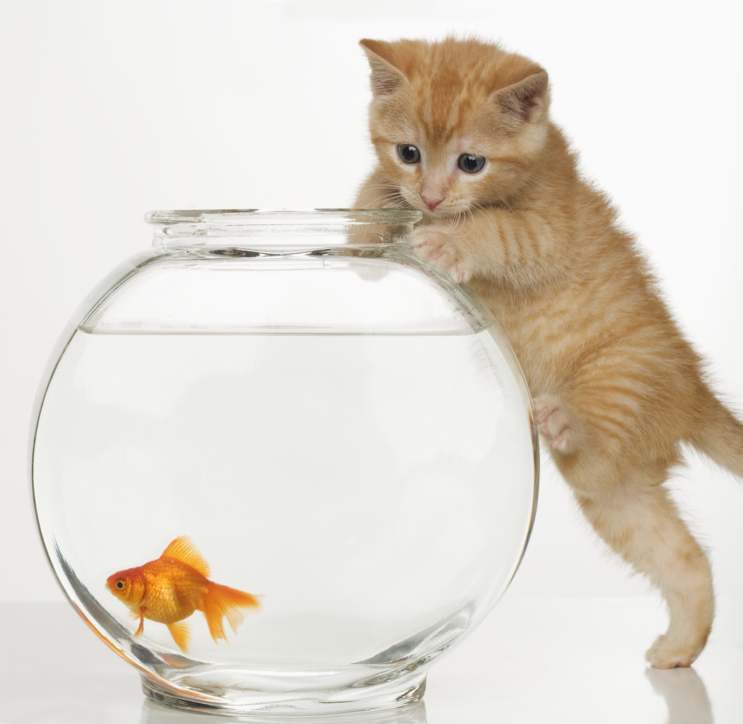 Kids fish tanks kidsaquariumsquotes and more for Fish videos for cats