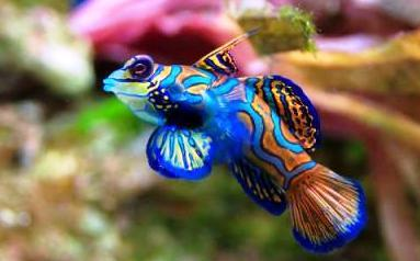 Fish of a different color kidsaquariumsquotes and more for Colorful freshwater aquarium fish