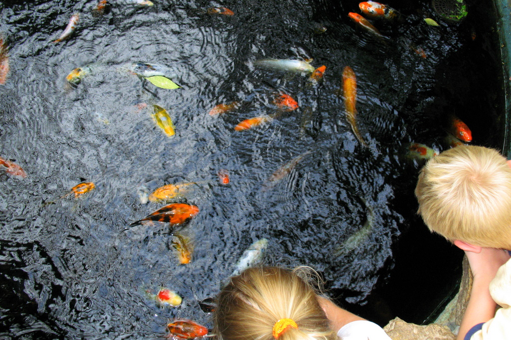 Kidsaquariumsquotes and more where nature meets kids for Koi fish quotes