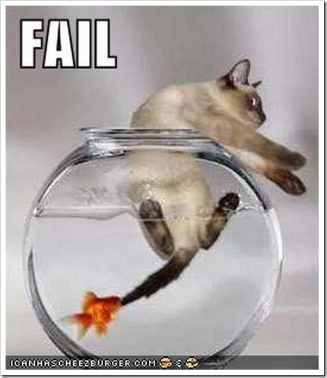 Funny fish and cat kidsaquariumsquotes and more for Www famil