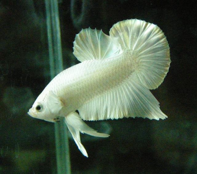 keeping betta fish healthy and well kidsaquariumsquotes