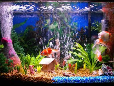 Aquarium decors think twice kidsaquariumsquotes and more for Tall fish tank decorations